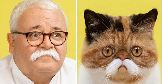 Фотограф доказал, что у кошек есть доппельгангеры среди людей. И наоборот.