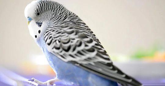 Попугай обругал наших родственников и они показали свою сущность
