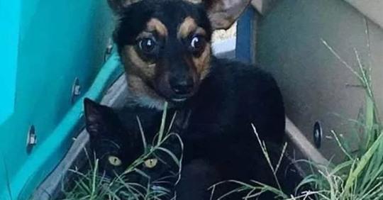 Бездомные кот и собака вместе спасались от холода и вместе попали в приют
