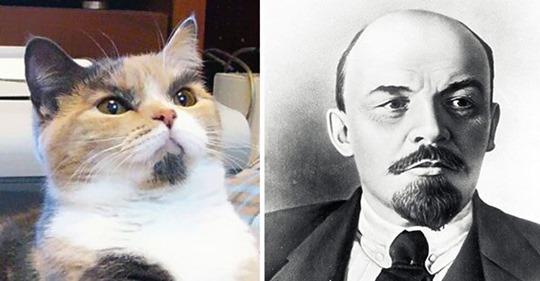 9 котов, которые не очень-то уж и похожи на самих себя