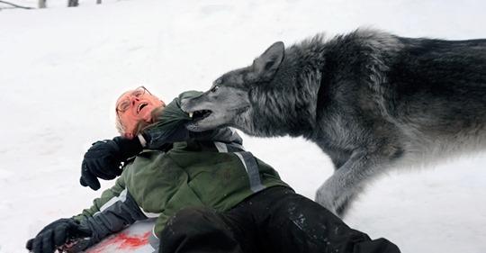 Еще немного и волк загрыз бы старика, но даже голодные волки помнят добро