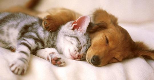Ученые объяснили, почему полезно брать кота и собаку в постель