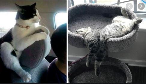 Не место красит кота, а кот — место! Смешная фотоподборка!