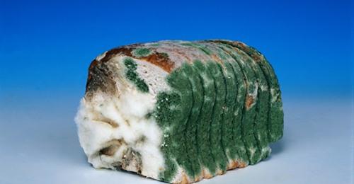 Врач-натуропат, кандидат медицинских наук, Виктор Хрущев: «Срочно исключите из своего рациона современный хлеб!»
