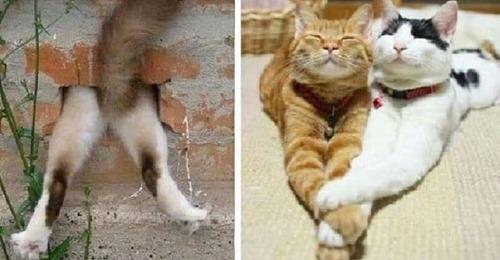 Коты — самые загадочные животные и 11 фото это подтверждают