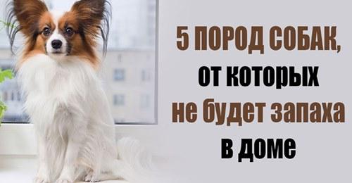 От каких собак не будет дома запаха