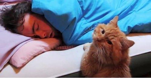 Каждое утро в 05:00 кот будит хозяина изощренным способом.