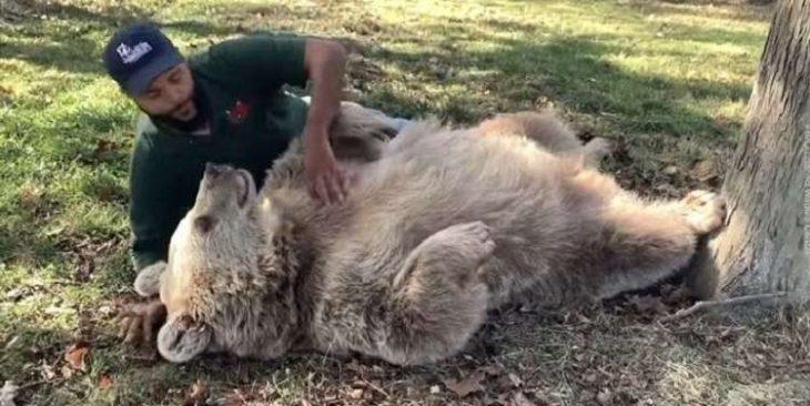 Человек заботился о медвежонке, а потом он вырос в большую медведицу – и она всё равно узнала его!