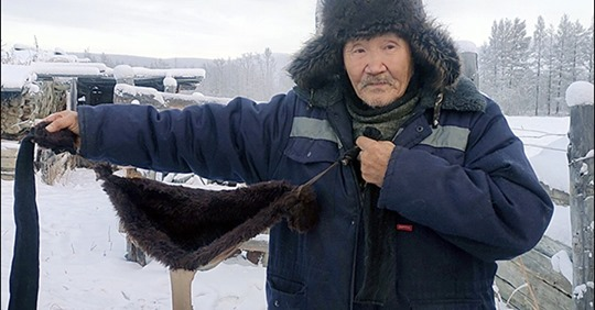 Британские журналисты удивились, что зимой в Сибири коровы носят «лифчики»