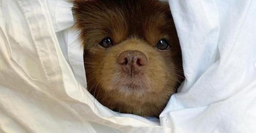 Щенка, похожего на медвежонка, бросили в приюте, но судьба была к нему благосклонна