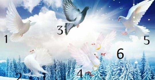 Тест: Выберите голубя и узнайте новости, которые он принес о вашем будущем