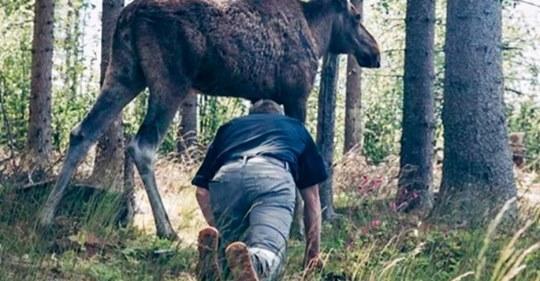 Мужчина всю жизнь охотился на лося, но случай произошедший с ним на болоте заставил бросить охоту навсегда