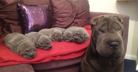Мамочки, которые очень гордятся щенками!