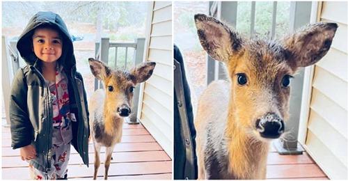 4 летний мальчик подружился с олененком в лесу и привел его домой