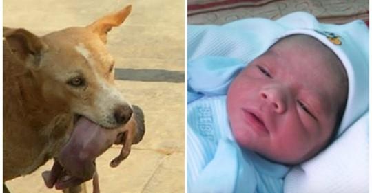 Бродячая собака нашла на мусорке и вынесла к людям… младенца! О таком спасении в городе ещё не слышали