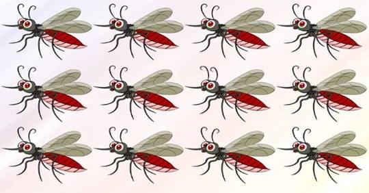 Сможете за 15 секунд найти комарика, не похожего на остальных?