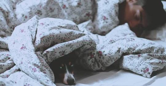 Ученые считают, что пускать пса в постель, полезно для здоровья