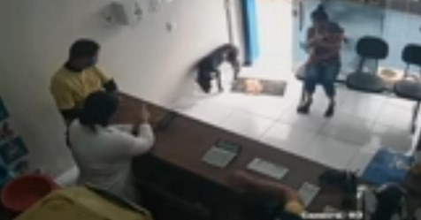 Бродячая собака пришла в клинику, чтобы попросить помощи у людей