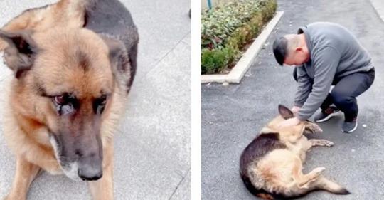 Собачья верность: пес расплакался, встретив бывшего напарника