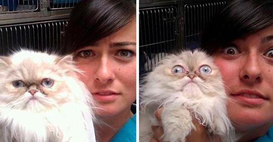 20 смешных котов, которые только что осознали, что находятся у ветеринара
