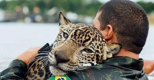 Они спасли его голыми руками! Утопающий ягуар обнял людей, как простой домашний кот… (4 фото)