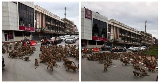 В Таиланде сотни обезьян устроили разборки на дороге