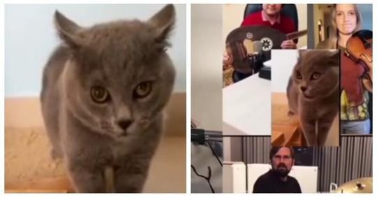 Отличный кавер из возмущений серого кота