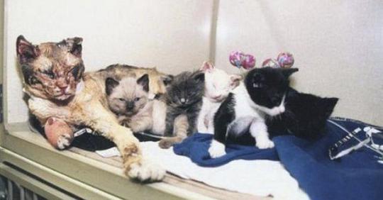 Кошка отчаянно спасала своих котят во время пожара