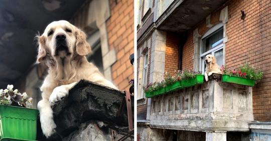 Милый пёс просто сидел на балконе, а стал главной достопримечательностью Гданьска. Его оценили даже выше Лувра
