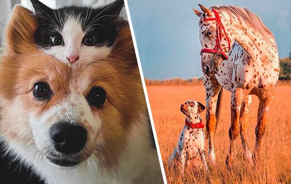 16 братанов из животного мира, которые подружились, несмотря на то, что относятся к разным видам