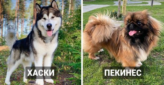 14 пород собак, которые оказались очень древними и появились одними из первых
