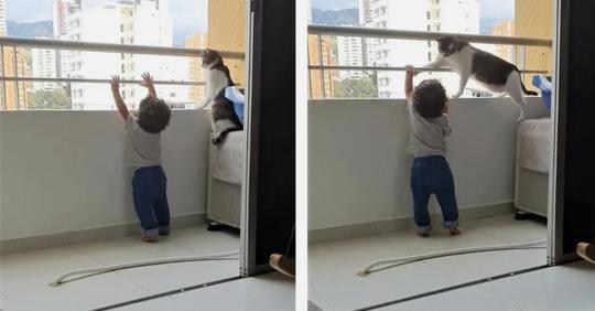 Кот вмешался, когда ребенок пытался вылезти с балкона