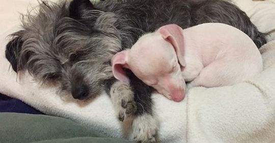 Слепой и глухой щенок, которого женщина забрала себе, стал любимцем школьников