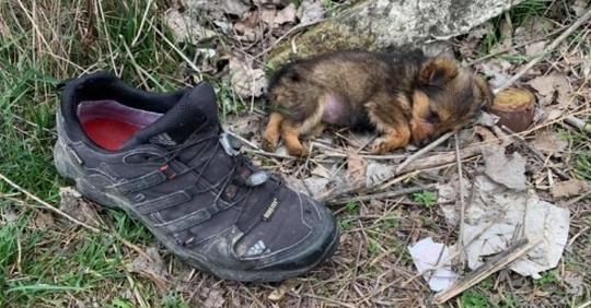 Щенок жил в ботинке, пока его не приютил волонтер – теперь малыша не узнать