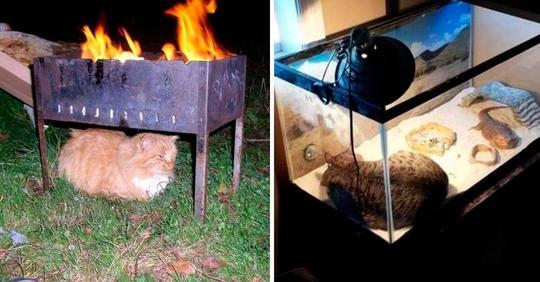 15 животных, которые очень хотят тепла