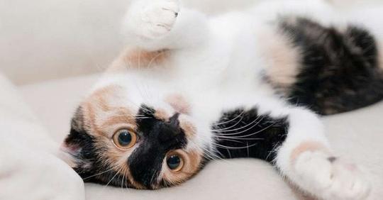 Я выгнала гостей из дома, потому что они обидели мою кошку. И считаю себя правой!