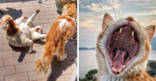 Итальянка фотографирует жизнь своих котов, да так, что ничего милее и смешнее вы сегодня не увидите